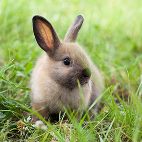 Warning signs of rabbit illness from Bayswater Veterinary Clinic