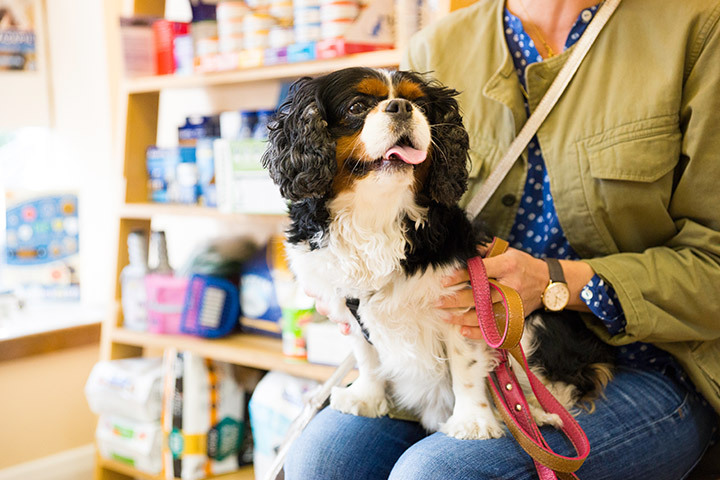 Regular pet health clubs in Bayswater