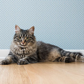 What's your cat's body condition score?