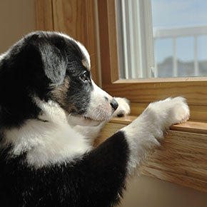 Is your dog anxious when you're out?