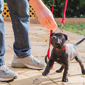 Essential training tactics for your puppy