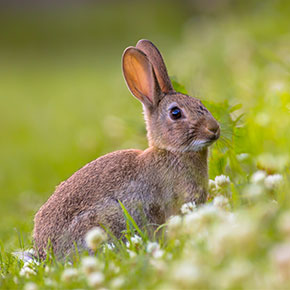 Rabbits suffer allergies too, says Michael Gordon