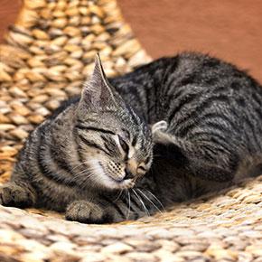 It's the time of year when cat fleas strike in London