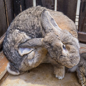 Protect rabbits from parasites at Bayswater Vets