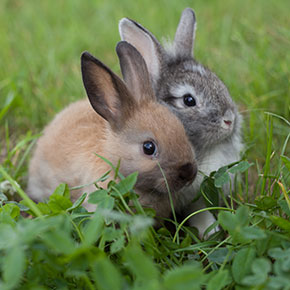 Expectant rabbits? Here's what to expect