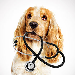 Three reasons for dog vets visits