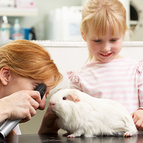What to expect at a guinea pig check-up