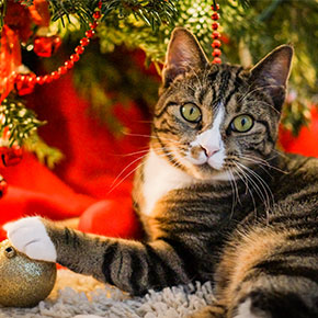 A better Christmas for cats around Bayswater