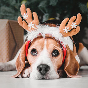 Have a merry (and safe) Christmas with your dog