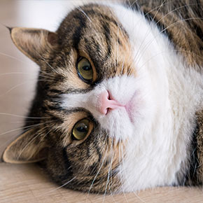 London cat owners: Is your pet fat or fit?