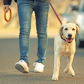 How your dog can help your health