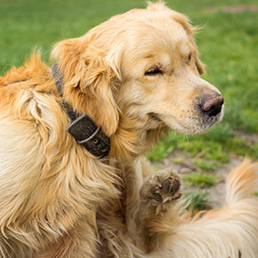 Why pet worming is so important