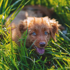 How to remove ticks from your dog