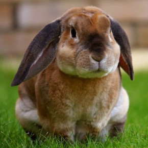 Spring in Bayswater – is your rabbit safe?