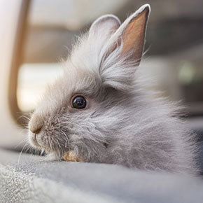 Travelling with a pet rabbit