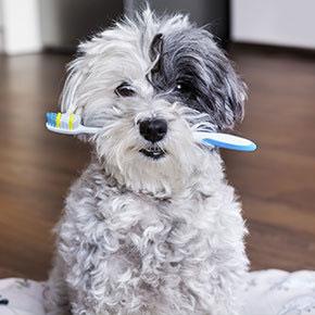 Doggy dental care explained