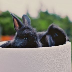 Bayswater Veterinary Clinic knows what rabbits want for Christmas