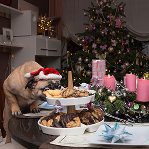 Keep your dog away from these festive treats