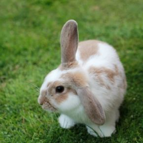 Has your rabbit got fleas?