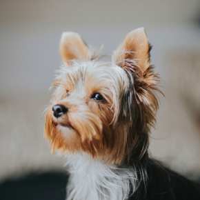 Why routine vet visits are important in Bayswater