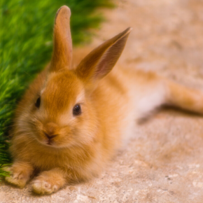 Ensure your rabbit gets the most from its next vet visit by following our easy tips.