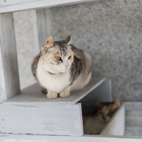 Our tips for choosing a cat sitter.