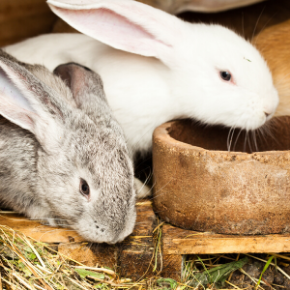 Holiday care for small mammals in Bayswater.