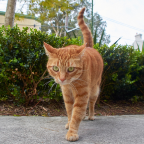 Bayswater Veterinary Clinic shares 7 ways to provide comfortable home care for arthritic cats