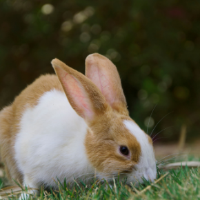 Test yourself on the signs & symptoms of rabbit arthritis