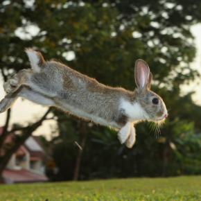 Exercising your rabbit in 7 easy steps
