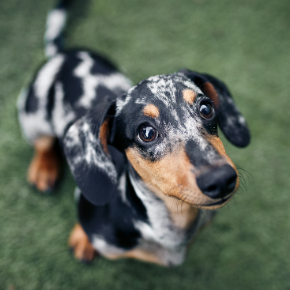 20 most popular dogs breeds of 2020