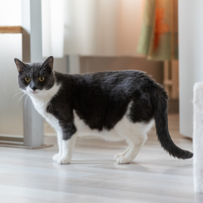 Bayswater Vets' advice on post-covid cat obesity & separation anxiety