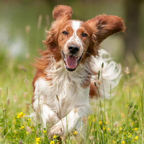 Adam talks Lyme disease, kennel cough and other summer dog diseases