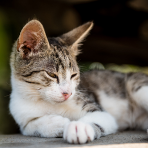 Do these 3 checks for common summer cat diseases