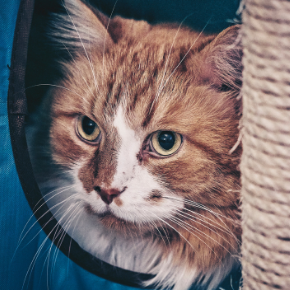 Going away? Get Kate's cat holiday care checklist