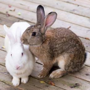 Kate advises if rabbits, guinea pigs & hamsters need companions