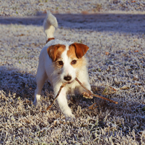 Five cold weather walking tips for your dog